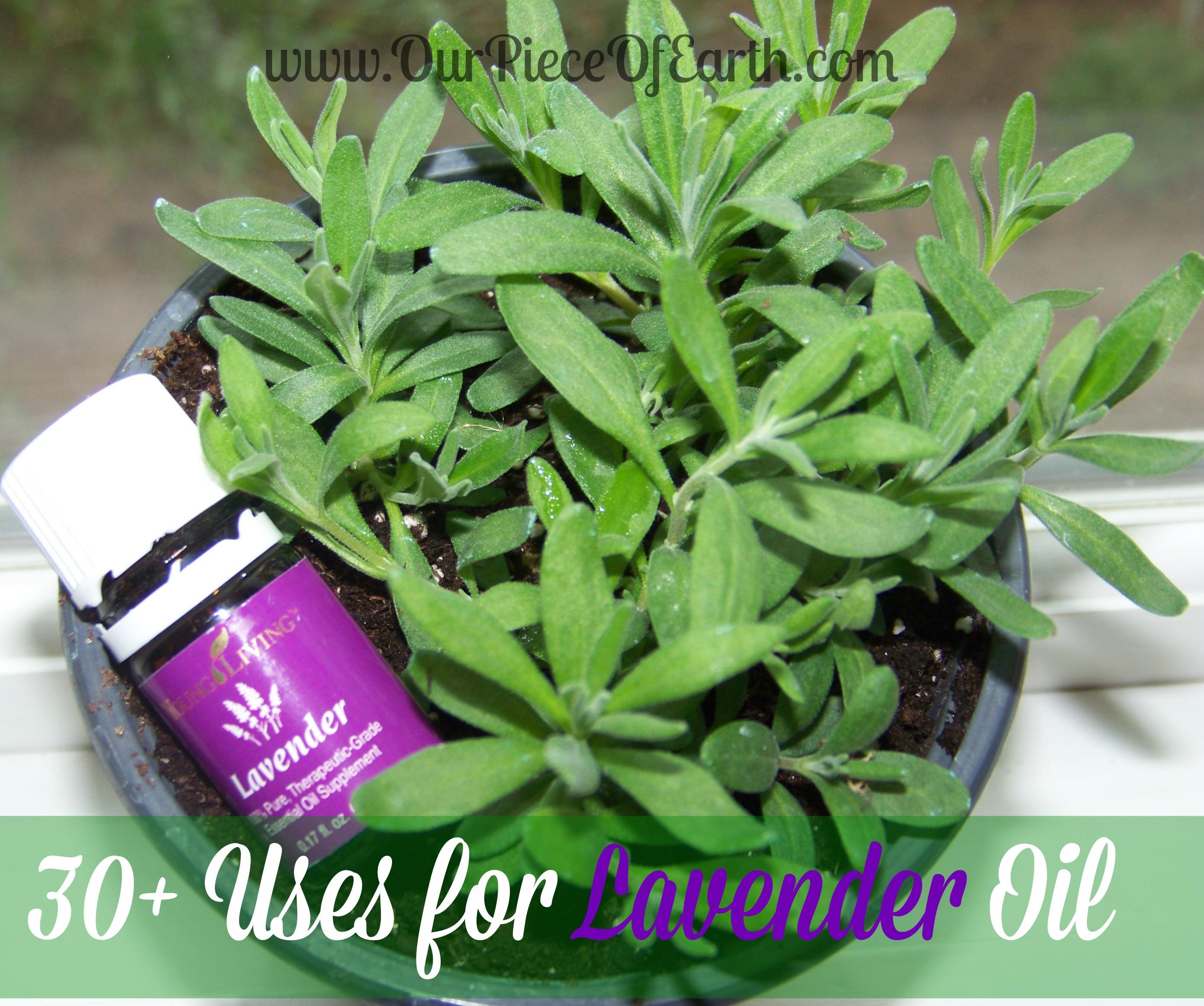 30+ Uses for Lavender Oil