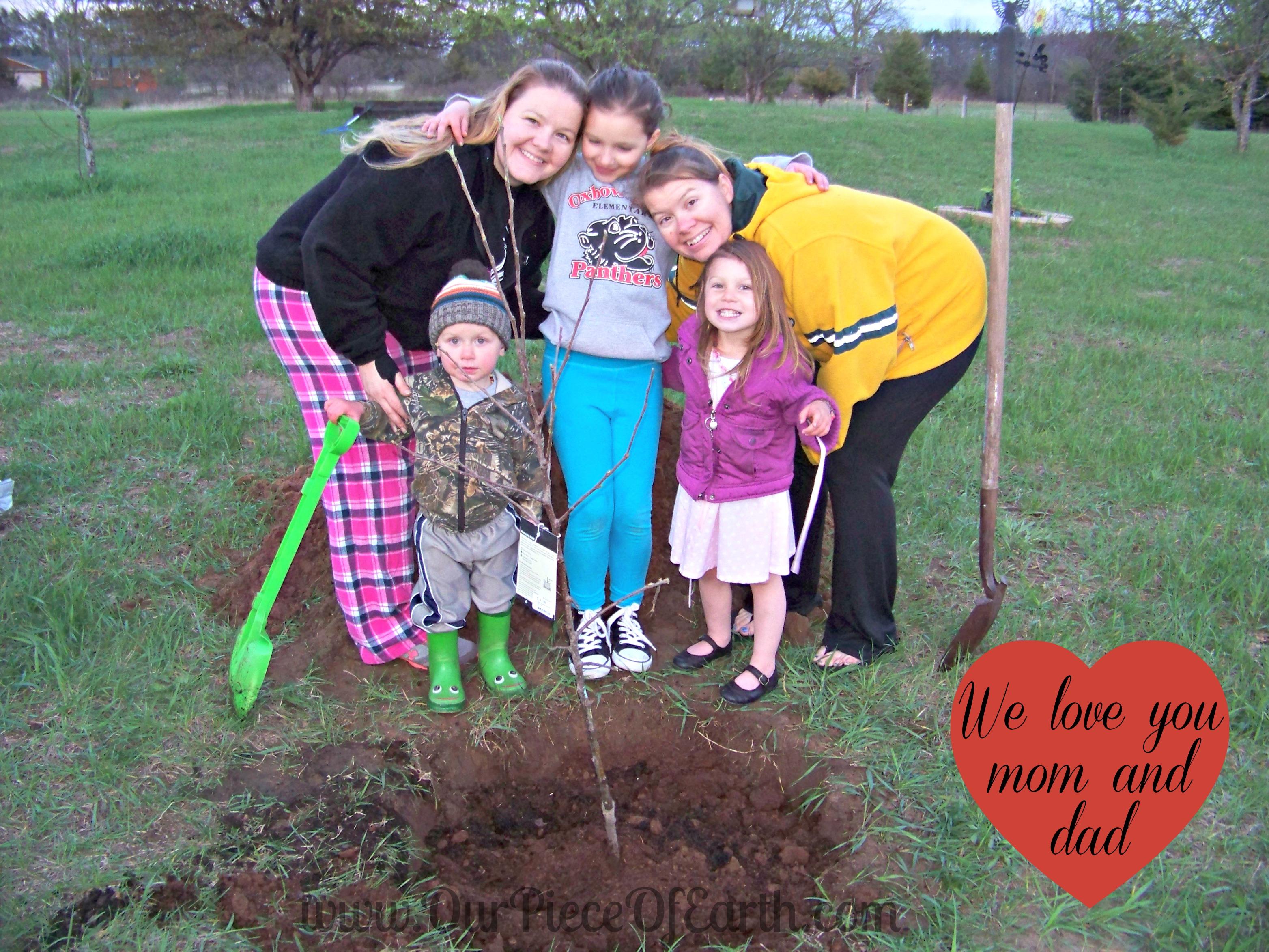 Rememberance apple tree