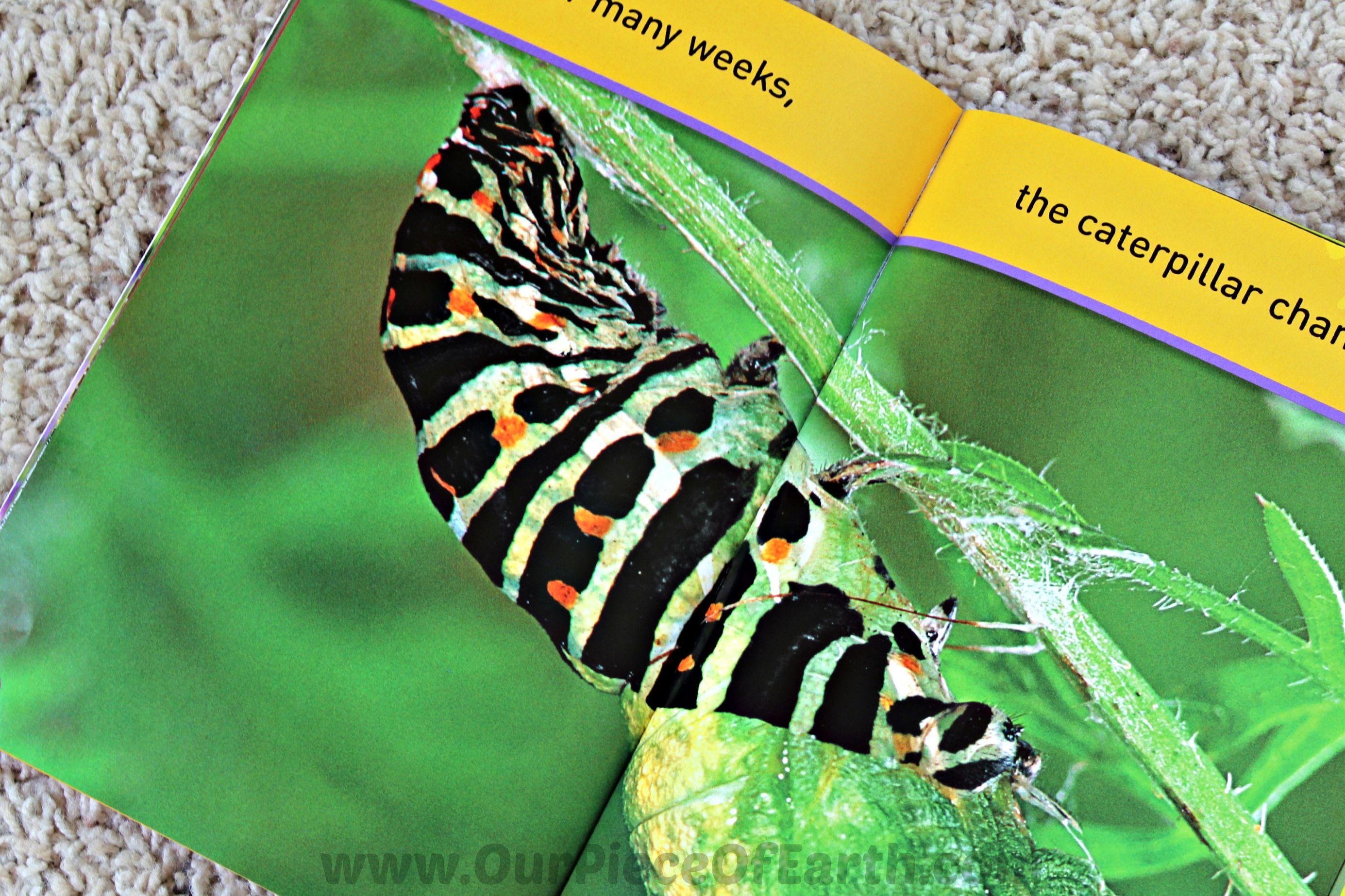 Caterpillar changing